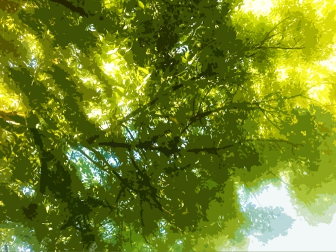 tree canopy in Davis Central Park