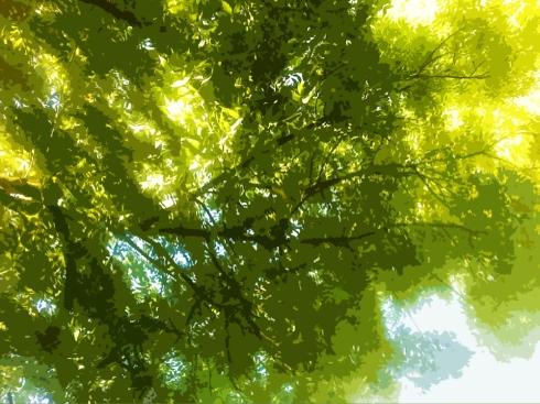 tree canopy in Davis Central Park