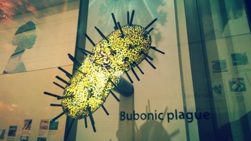 bubonic plague cell