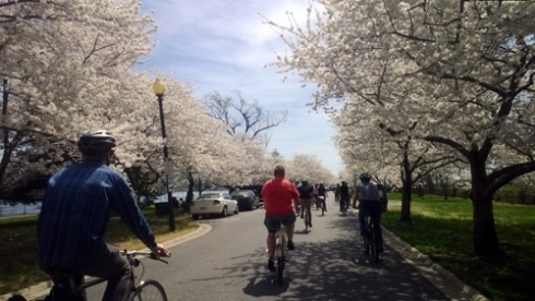 cherry blossom bike ride through East Potomac Park
