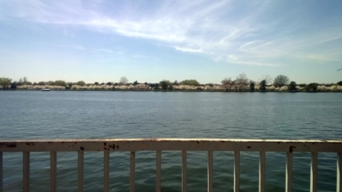 East Potomac Park during cherry blossom season